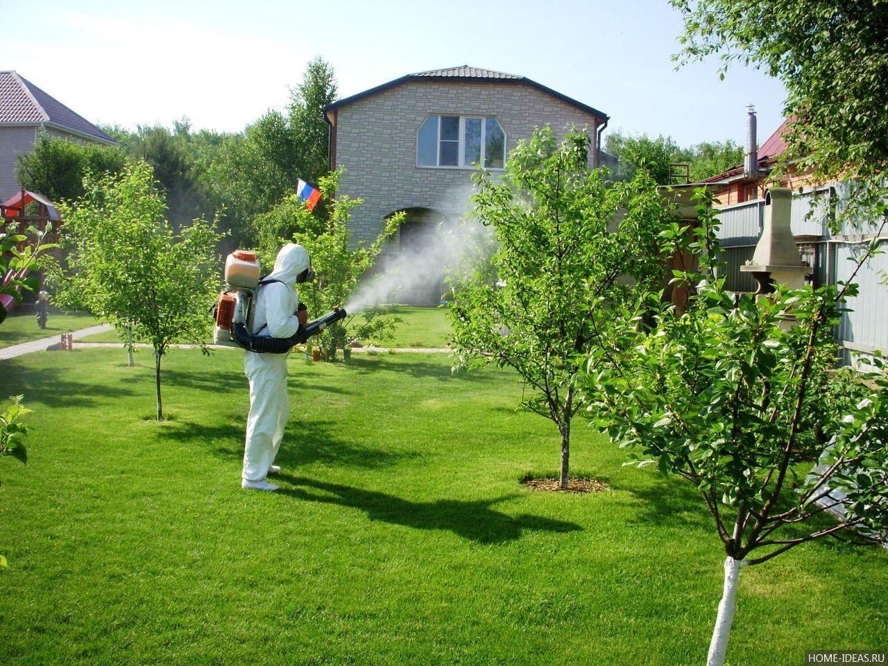 Как обработать участок от комаров своими руками